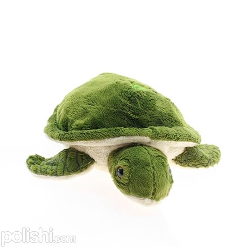 تصویر لاکپشت برمودا Bermuda